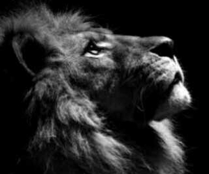 animal, beautiful, and black and white image