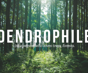 forest, tree, and words image