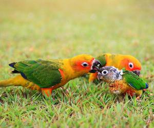animals, parrot, and baby image