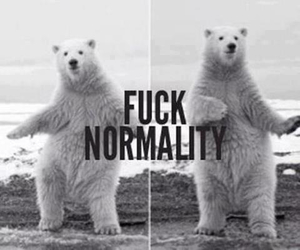 animals, normality, and bear image