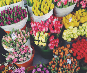 beauty, colours, and flowers image