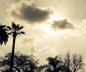 beauty, clouds, and palms image