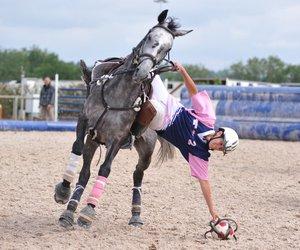 grey, horse, and motivation image