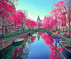 amsterdam, beautiful, and pink flowers image