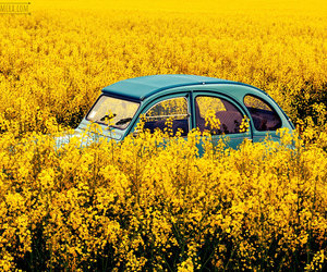 car, summer, and yellow image