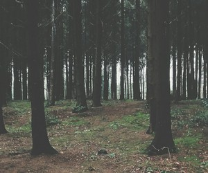 background, forest, and tree image