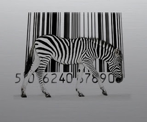 zebra, black, and white image