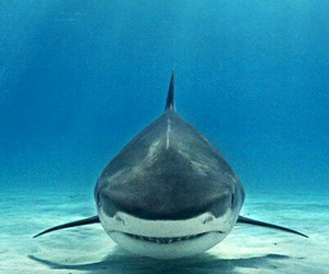 shark, sea, and ocean image