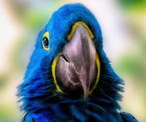 blue, nature, and parrot image