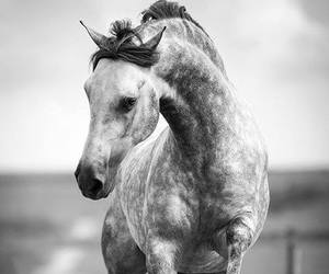 horse and grey image