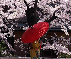 japan, kimono, and flowers image