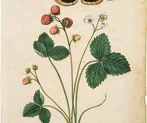 moth & wild strawberries image