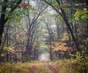 forest, woods, and leaves image