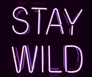 wild, stay wild, and light image