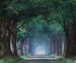 beauty, nature, and trees image