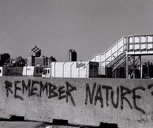 nature, graffiti, and remember image
