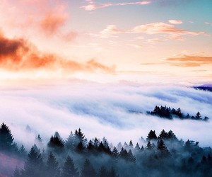 fog, beautiful, and beauty image