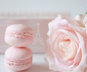 pink, rose, and pastel image