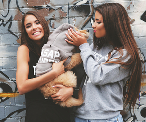 dog, bff, and friends image