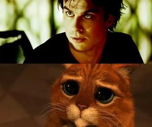 ian somerhalder, cat, and damon image