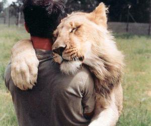 lion, hug, and animal image