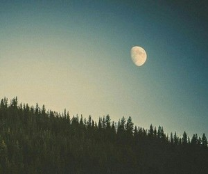 blue, moon, and bosque image