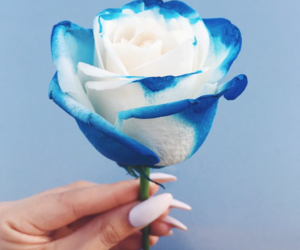 blue, white rose, and woman image
