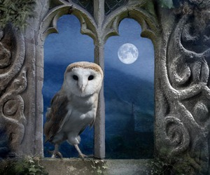 night and owl image