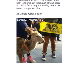 deer, exo, and kpop image