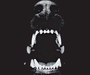 dog, black, and teeth image