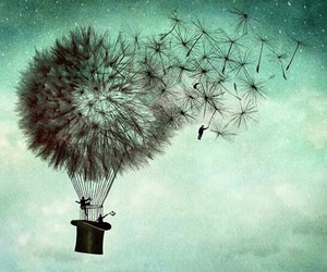 fly, Dream, and dandelion image