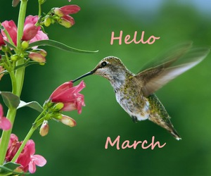 hummingbird and march image