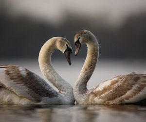 love and bird image