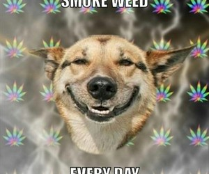 dogs, funny, and marijuana image