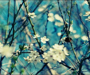 flowers, spring, and blue image