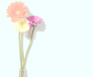flower and gerbera image