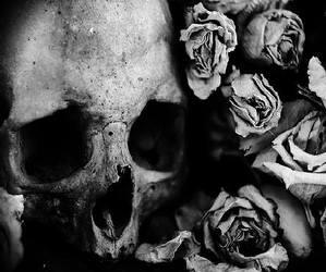 bones, photography, and skull image