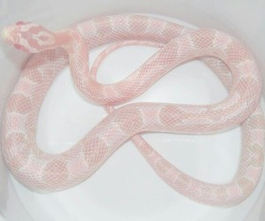 pink, snake, and pale image