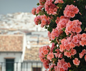 beauty, spring, and summer image
