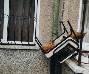 cat, vscocam, and cats image