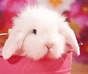 animal, pink, and rabbit image