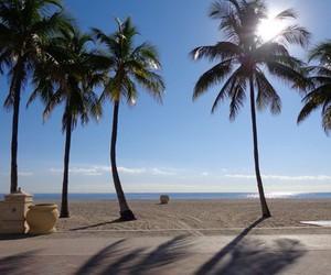 florida, Miami, and palms image