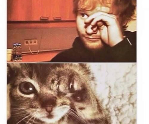 cat and ed sheeran image