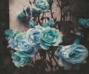 flowers, blue, and header image