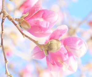 blossom, colour, and flowers image