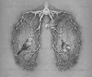 birds, lungs, and creepy image