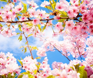 beautiful, spring, and blue sky image