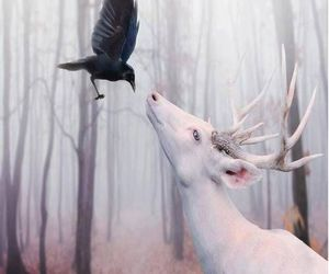 animals, black and white, and crow image