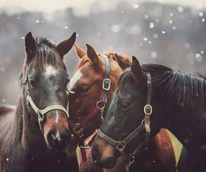 horses, winter, and cute image