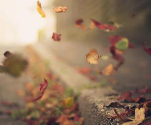 autumn, beautiful, and fly image